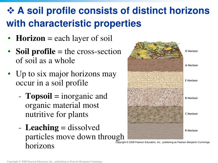 A soil profile consists of distinct horizons with characteristic properties