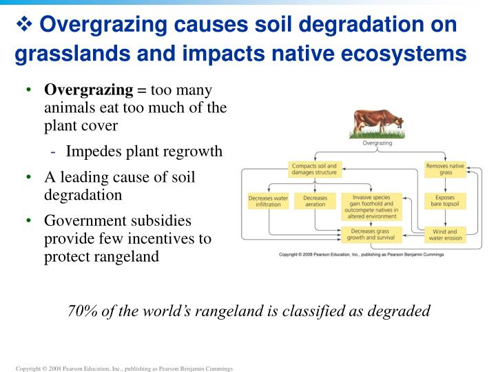 Overgrazing causes soil degradation on grasslands and impacts native ecosystems