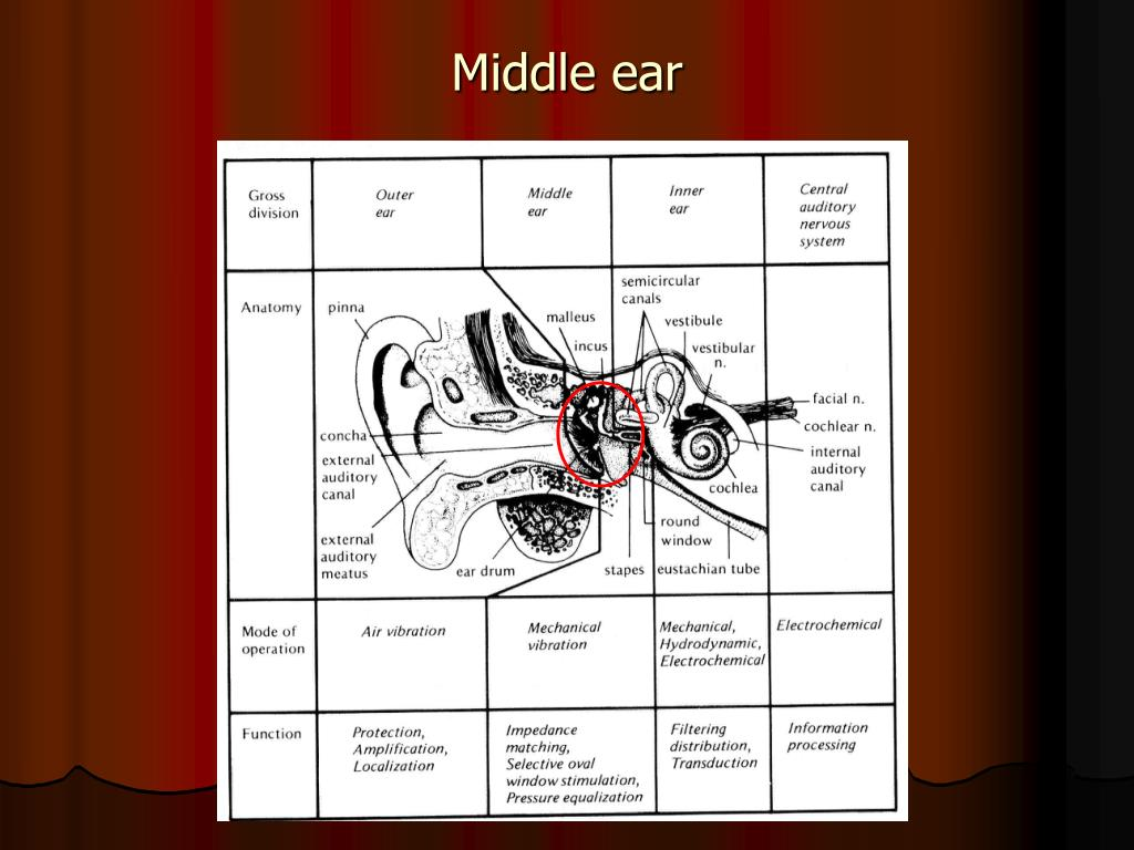 PPT - Middle ear PowerPoint Presentation - ID:3792146