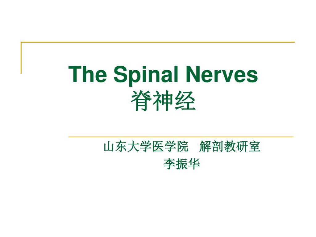 PPT - The Spinal Nerves 脊神经 PowerPoint Presentation - ID:3795674