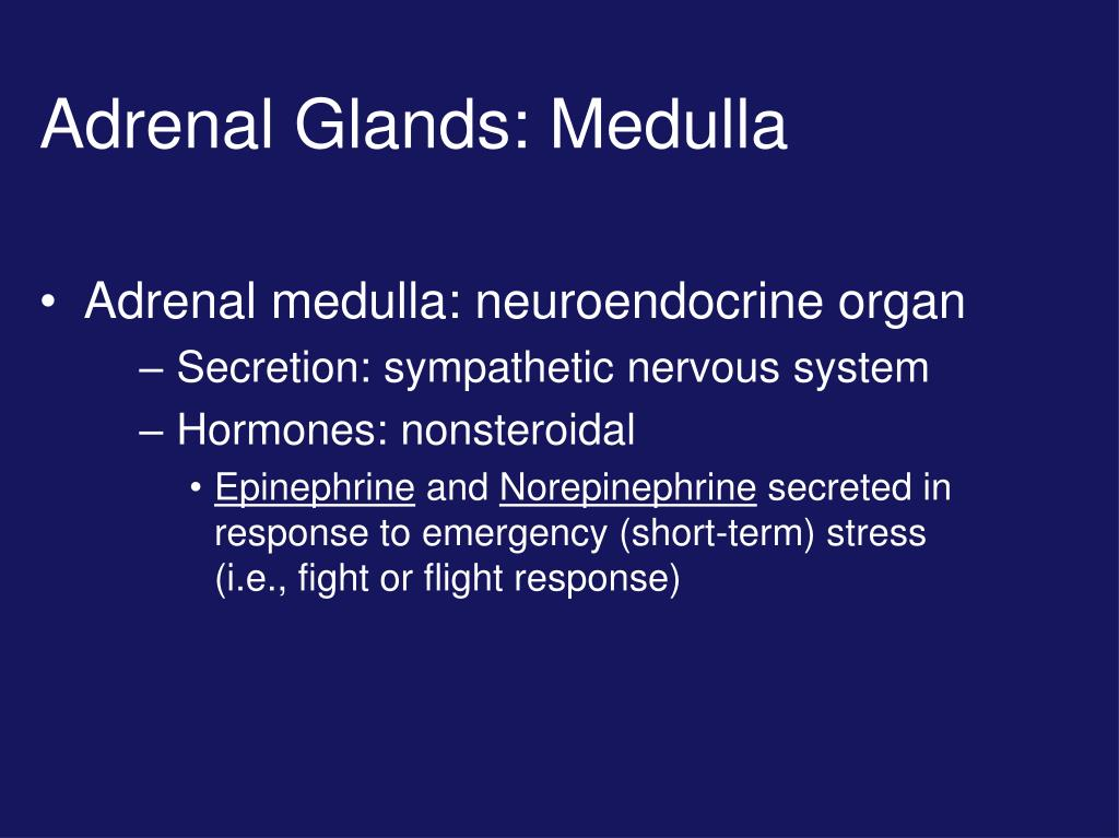 PPT - Adrenal Medulla Gland PowerPoint Presentation - ID:3796386