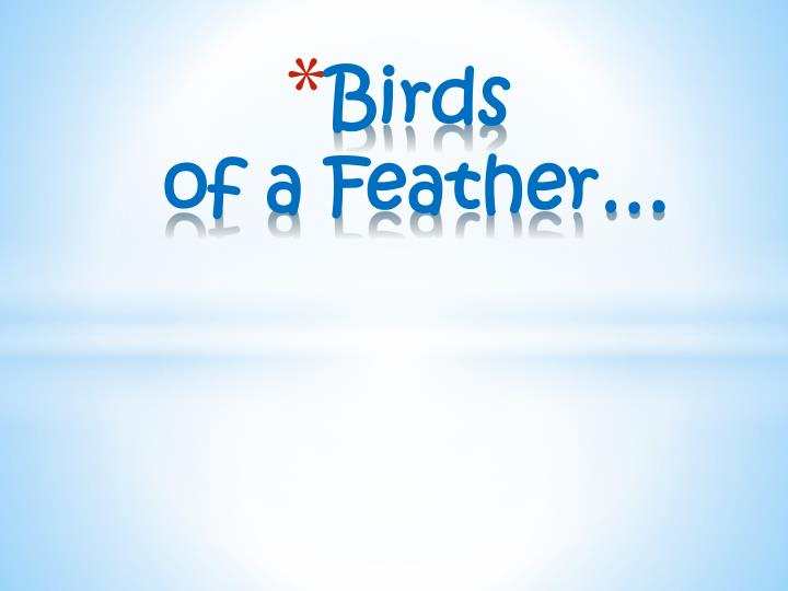birds of a feather n.