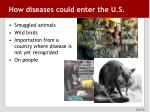how diseases could enter the u s