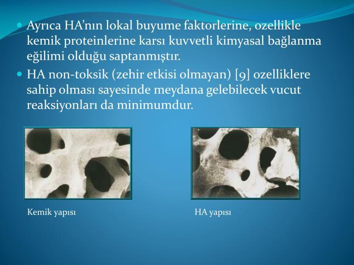 Kemik yapısı