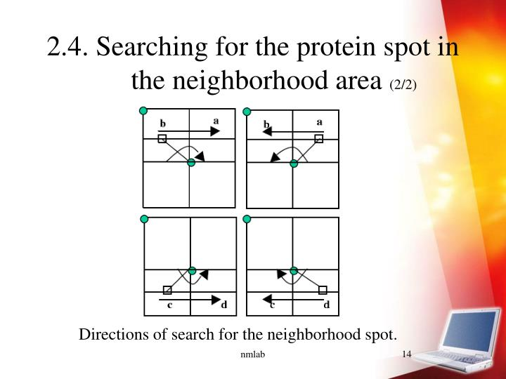 2.4. Searching for the protein spot in the neighborhood area