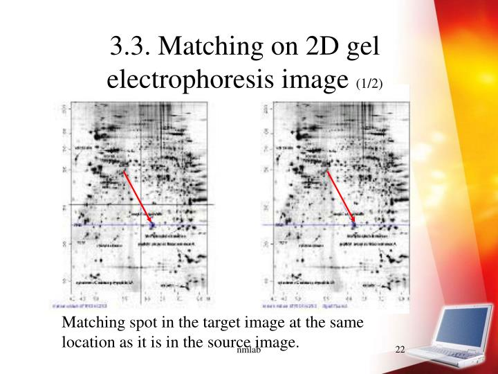3.3. Matching on 2D gel electrophoresis image