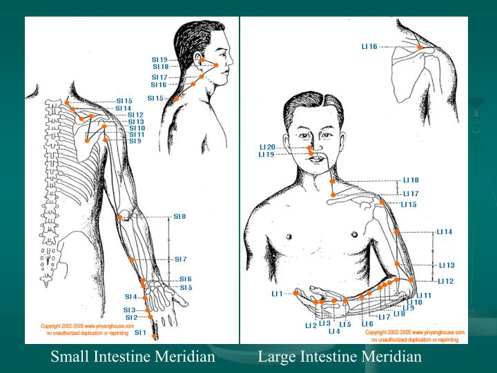 Small Intestine Meridian  Large Intestine Meridian