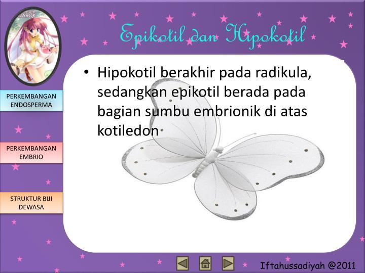 Epikotil