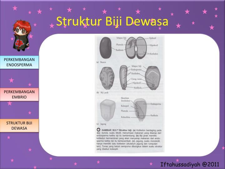 Struktur Biji Dewasa
