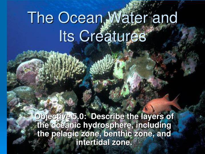 the ocean water and its creatures n.