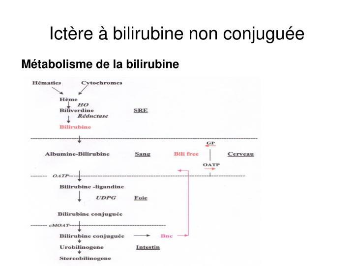 Ict re bilirubine non conjugu e2