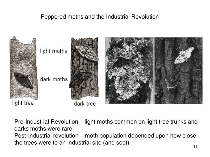 Peppered moths and the Industrial Revolution
