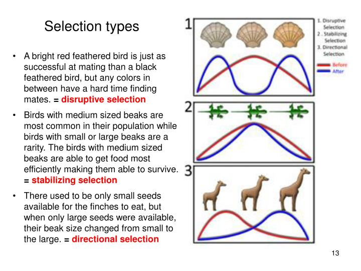 Selection types