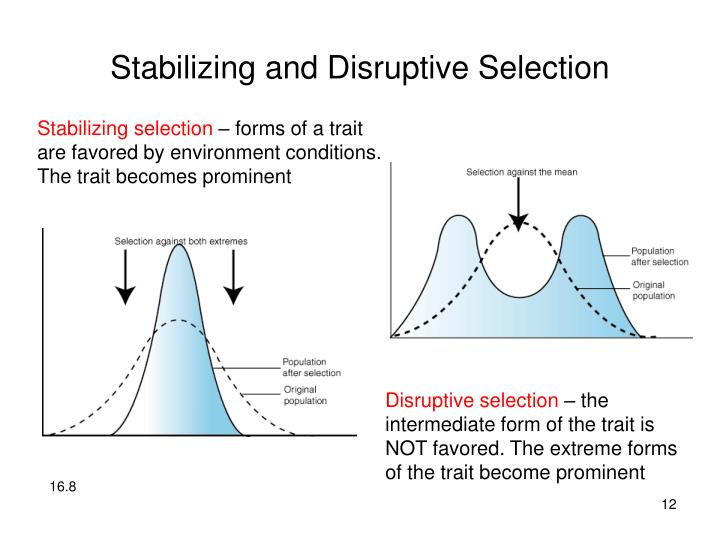 Stabilizing and Disruptive Selection
