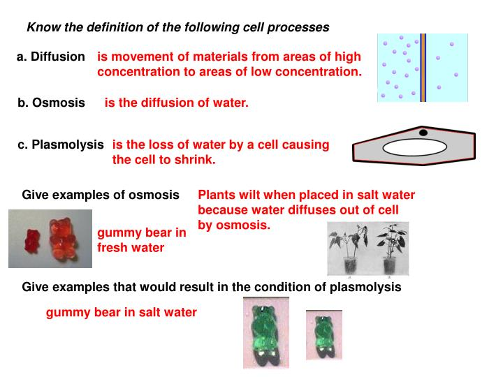Know the definition of the following cell processes