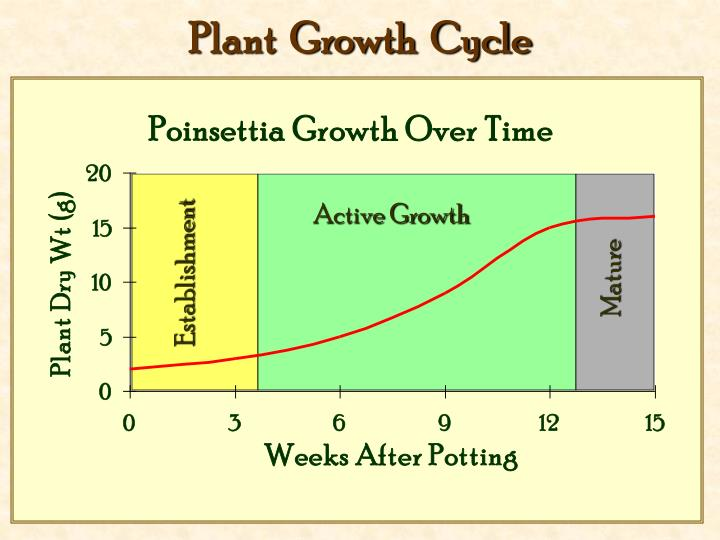 Plant  Growth  Cycle