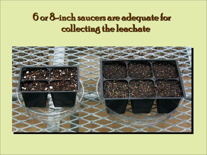 6 or 8-inch saucers are adequate for collecting the leachate
