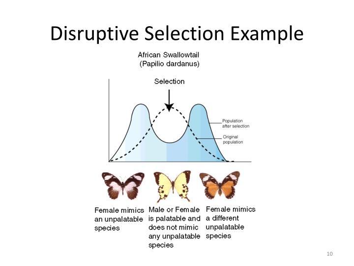 ppt - population evolution powerpoint presentation - id:3807366