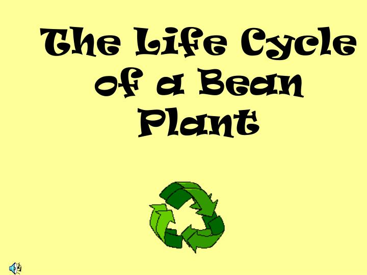 the life cycle of a bean plant n.