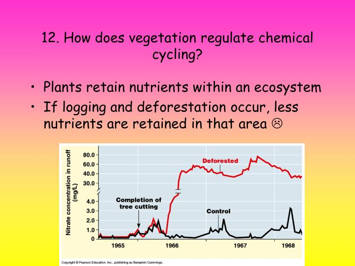 12. How does vegetation regulate chemical cycling?