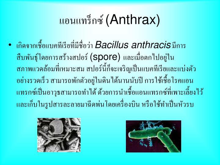แอนแทร็กซ์ (Anthrax)