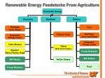 renewable energy feedstocks from agriculture