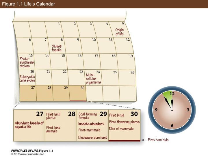 Figure 1.1 Life's Calendar
