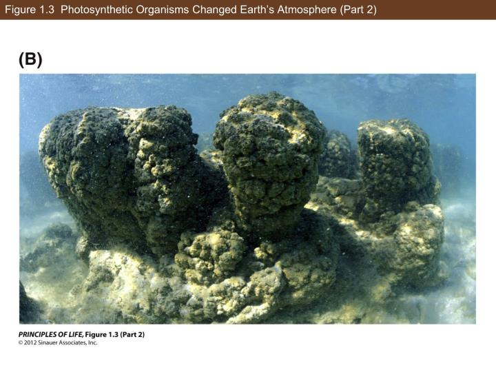 Figure 1.3  Photosynthetic Organisms Changed Earth's Atmosphere (Part 2)