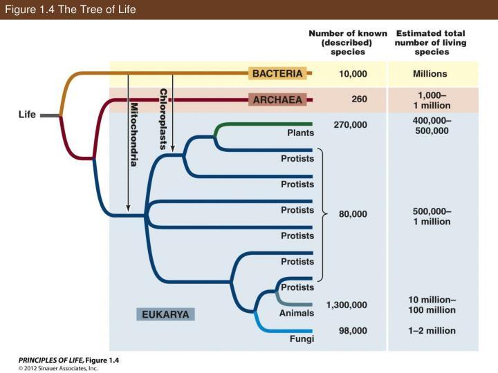 Figure 1.4 The Tree of Life