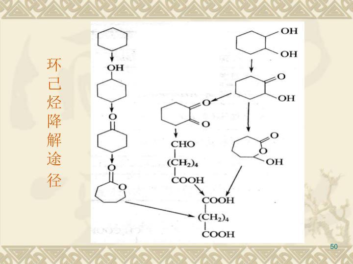 环己烃降解途径