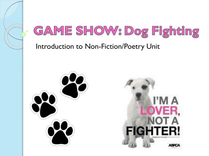 game show dog fighting n.