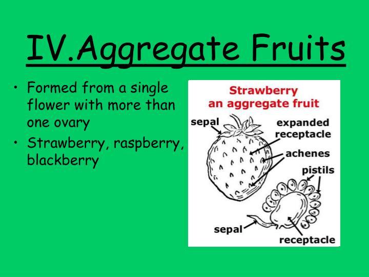IV.Aggregate Fruits