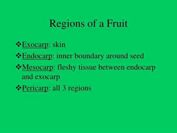 Regions of a Fruit