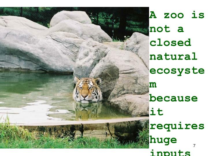 A zoo is not a closed natural ecosystem because it requires huge inputs of
