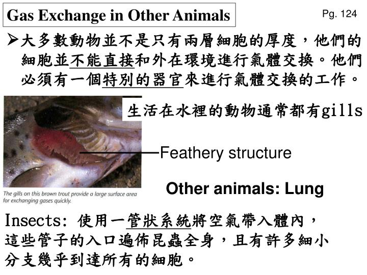Gas Exchange in Other Animals
