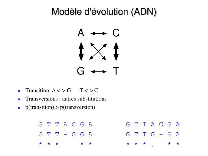 Modèle d'évolution (ADN)