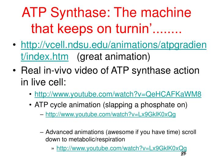 ATP Synthase: The machine that keeps on turnin'........