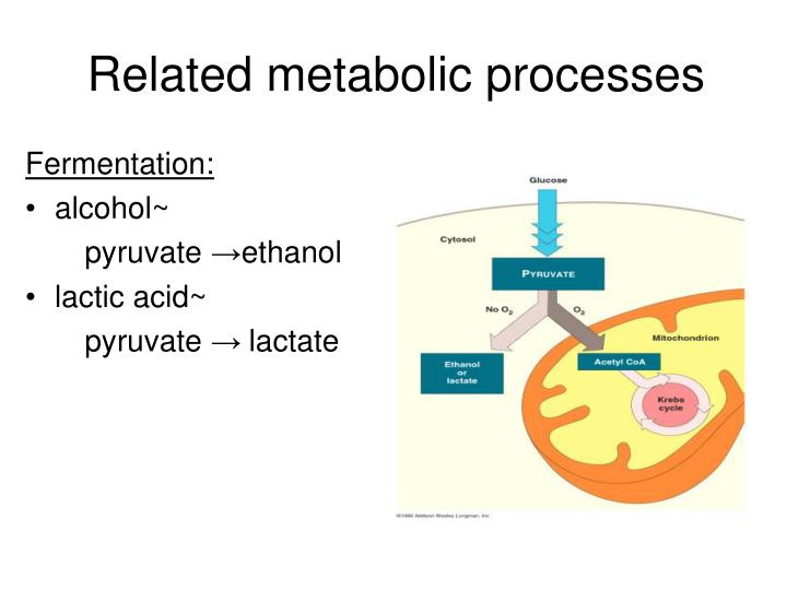 Related metabolic processes