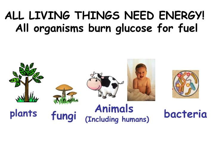 ALL LIVING THINGS NEED ENERGY!