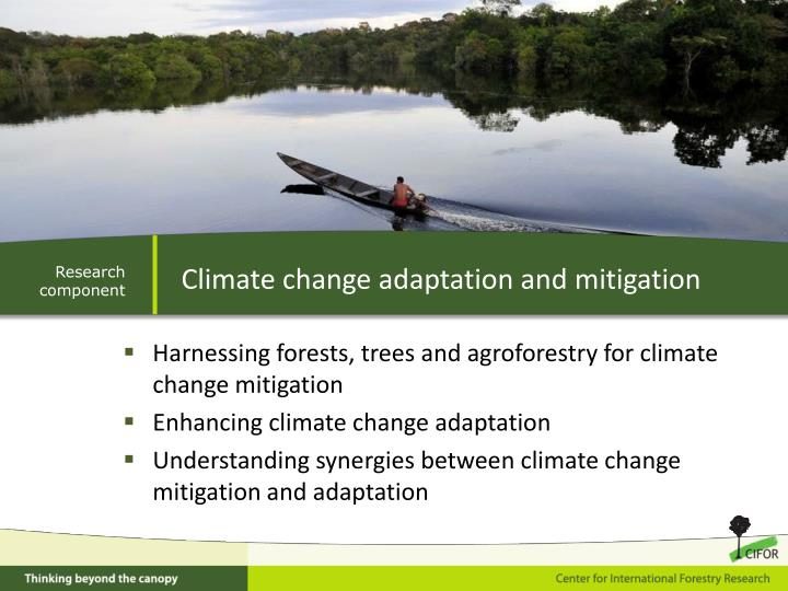 Harnessing forests, trees and agroforestry for climate change mitigation
