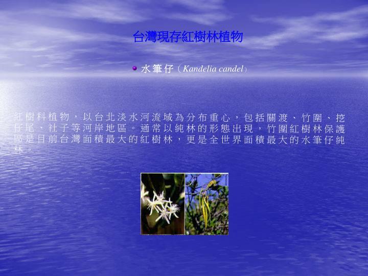 台灣現存紅樹林植物