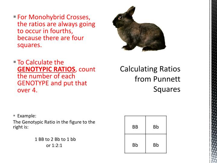For Monohybrid Crosses, the ratios are always going to occur in fourths, because there are four squares.