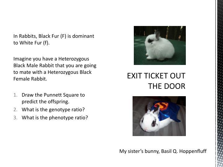 In Rabbits, Black Fur (F) is dominant to White Fur (f).