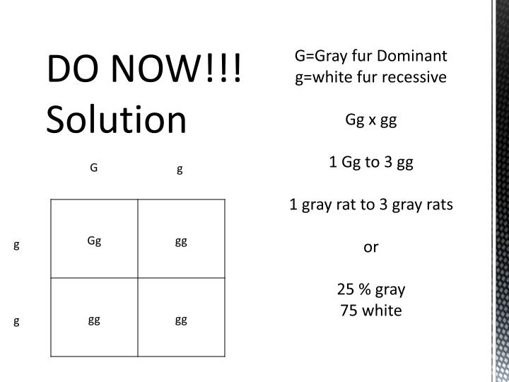 G=Gray fur Dominant