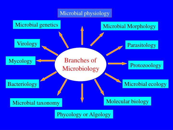 PPT - Fundamentals of Microbiology PowerPoint Presentation