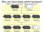 why are there fewer white hamsters which color is dominant which is recessive