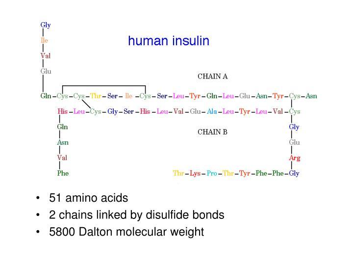 51 amino acids