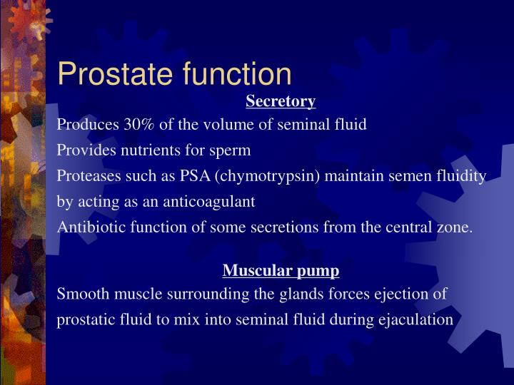 Prostate function
