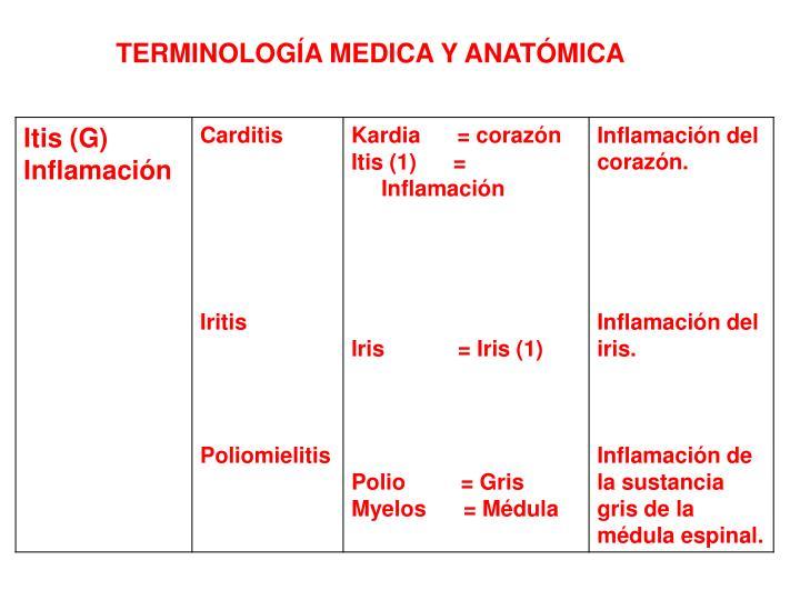 PPT - ANATOMIA PowerPoint Presentation - ID:3819416