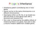 p o l y g e n i c inheritance